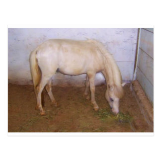 Lil Pony-2 Postcard
