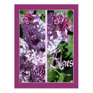 LILAC BOOKMARKS POSTCARD