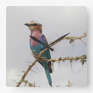 Lilac Breasted Roller Bird Clock