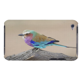 Lilac-breasted roller (Coracias caudata) iPod Touch Case-Mate Case