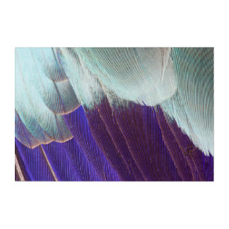 Lilac Breasted Roller Feather Abstract Acrylic Print