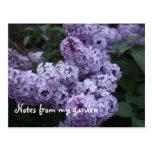 Lilac Flowers Postcard