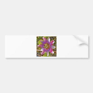 lilac passion flower bumper sticker