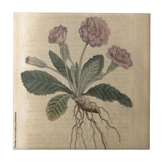 Lilac Primrose Small Square Tile
