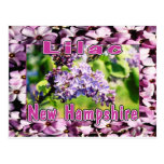 Lilac - The NH State Flower Post Cards