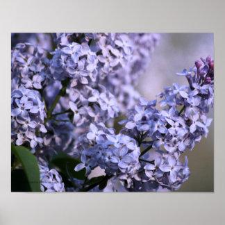 Lilac Vision Print