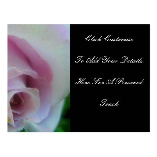 Lilac Wedding Rose Postcard