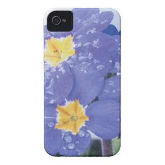 Lilac Winter Flowering Pansy iPhone 4 Cover