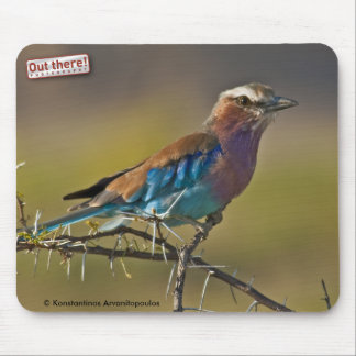 Lilacbreasted Roller Mouse Pad