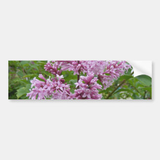 Lilacs Blooming Bumper Stickers