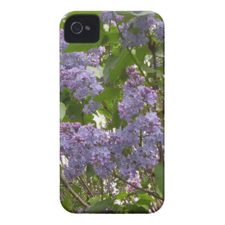 Lilacs iPhone 4 Case-Mate Cases
