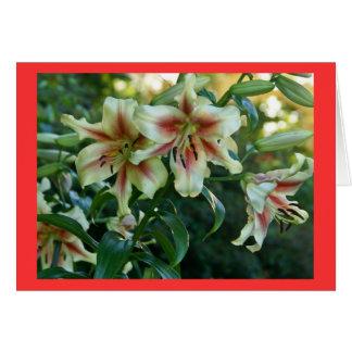 Lilies at Missouri Botanical Garden Card
