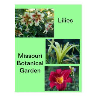 Lilies at Missouri Botanical Garden Postcard