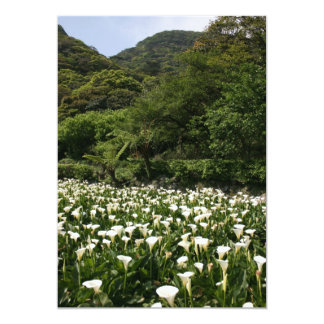 Lilies growing at Calla Lily Plantation, Taiwan 13 Cm X 18 Cm Invitation Card