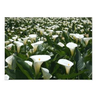 Lilies growing at Calla Lily Plantation, Taiwan 13 Cm X 18 Cm Invitation Card