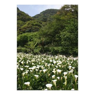 Lilies growing at Calla Lily Plantation, Taiwan Invitation