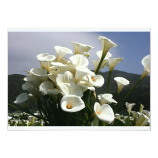 Lilies growing at Calla Lily Plantation, Taiwan Custom Announcement