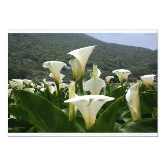 Lilies growing at Calla Lily Plantation, Taiwan Custom Invites