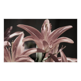 Lilies-Muted Tones Poster