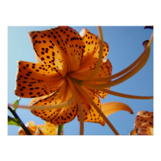 LILIES Tiger Lily Flowers Art Prints Framed Sky Print