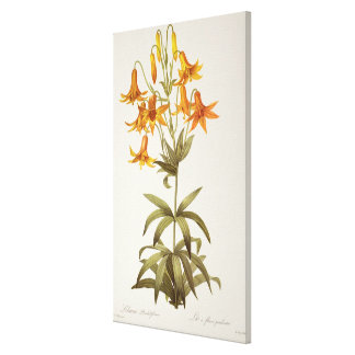 Lilium Penduliflorum, from `Les Liliacees', 1811 Canvas Print