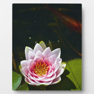 Lilly and Lotus Display Plaques