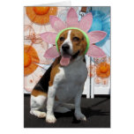 Lilly - Beagle -2