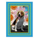 Lilly - Beagle -2F