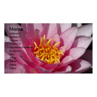 Lilly Pack Of Standard Business Cards