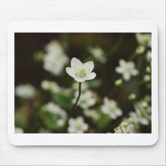 Lilly flower mousepad