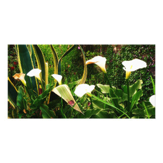 Lilly Flowers Rock Mexico Photo Cards