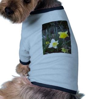 Lily 001 ringer dog shirt