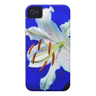 lily-227836  lily flower royal blue background nat iPhone 4 Case-Mate case