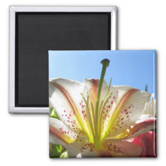 Lily 2 square magnet