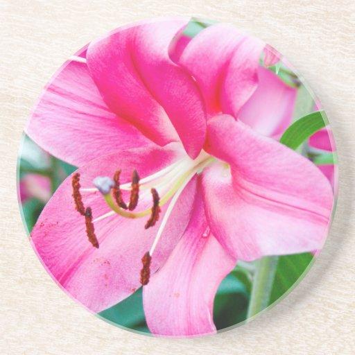 Lily 408 coaster