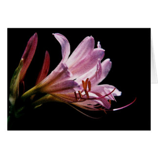 Lily_4 watercolor greeting card