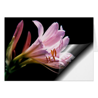 Lily_4d Greeting Card