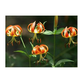 Lily, Acrylic Print. Acrylic Print