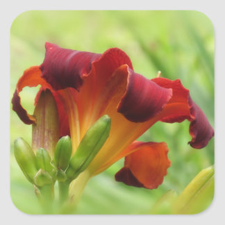 Lily Back - Daylilies Square Sticker