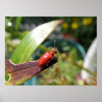 Lily beetle macro Print