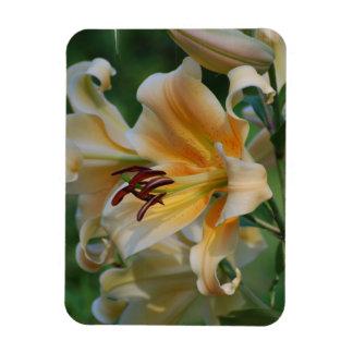 Lily Blossoms  Premium Magnet Rectangle Magnet
