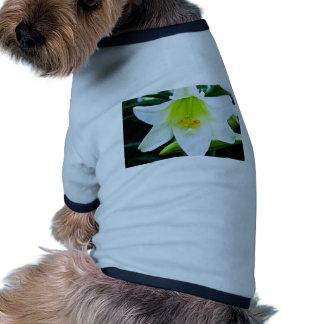 Lily Pet Clothes
