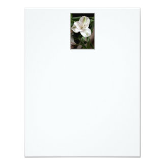 Lily Flower. Card