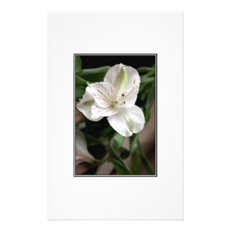Lily Flower. Flyer