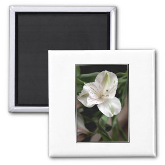 Lily Flower. Magnet