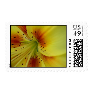Lily Flower Yellow Postage