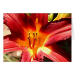 Lily Greeting Cards