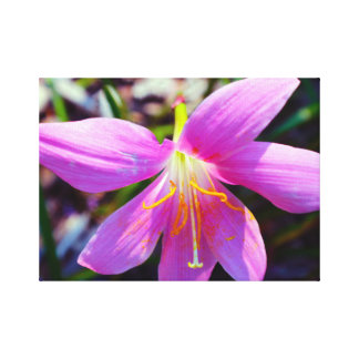Lily Large Canvas Print