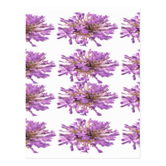LILY Lilly Cream Voilet Purple Pink Moonshine Postcard