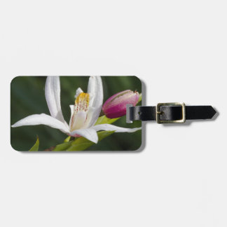 lily luggage tag